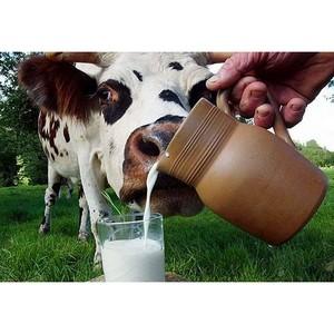 V Международная конференция «Развитие мясного и молочного скотоводства» состоится в Москве