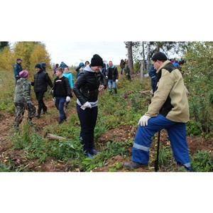 Энергетики Удмуртэнерго поддержали Всероссийскую экологическую акцию «Живи лес»