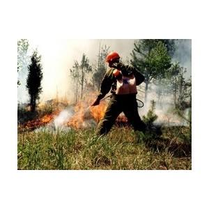 На лицензионном участке «Аганнефтегазгеологии» ликвидирован лесной пожар