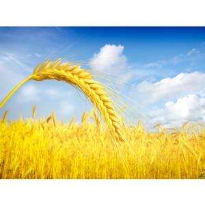Без декларации зерно опасно