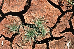 Активисты ОНФ в Чечне обеспокоены развитием эрозии почв сельскохозяйственных угодий региона