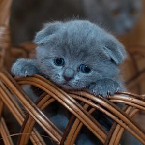 Купить котенка. На что надо обратить внимание.