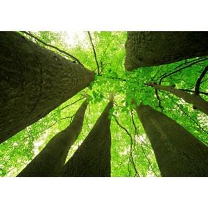 WWF и Kastamonu поддержат национальные парки России