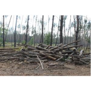 Активисты Народного фронта обеспокоены вырубкой леса в селе Ямное