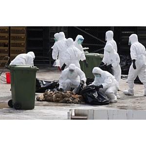 Вспышка инфицирования вирусом «птичьего» гриппа (H5N8)