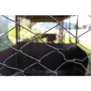 ОНФ выявил сомнительный контракт на отлов и содержание безнадзорных животных в Голышмановском районе