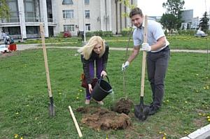 Аллеи костромских энергетиков пополнились новыми деревьями