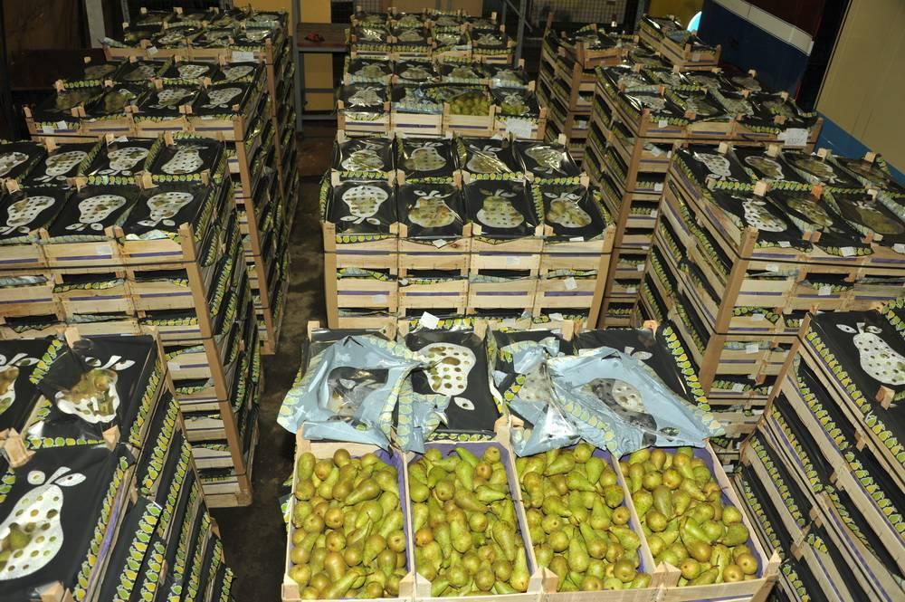 Смоленские таможенники задержали ливанские груши «родом» из Польши