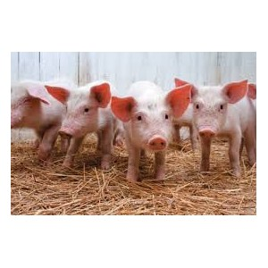 О мониторинге эпизоотической ситуации по африканской чуме свиней за 10 месяцев 2014г