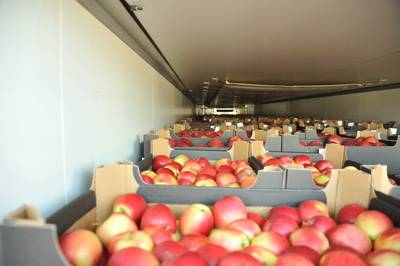 Более 120 тон польских яблок и груш задержали смоленские таможенники