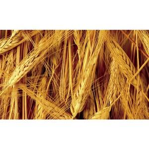 Глава КФХ в Каширском районе нарушил условия хранения зерна