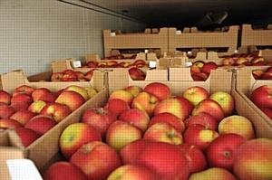 100 тонн польских яблок задержаны на границе с Белоруссией