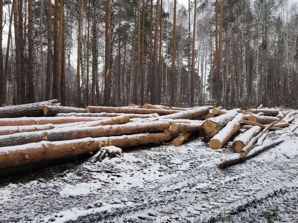 Челябинские активисты ОНФ выявили нарушения при выборочных рубках в Чебаркуле
