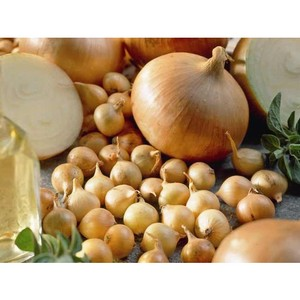 Что необходимо знать, выбирая лук-севок