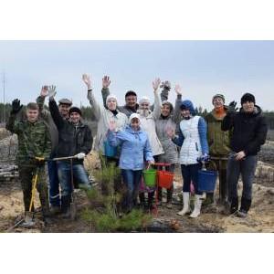 В Год экологии специалисты «Мариэнерго» высадили более 4000 саженцев сосны