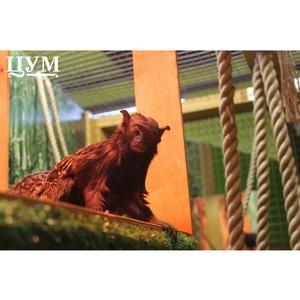 Краснорукие тамарины появились в «Ручном ZOOпарке» ЦУМа