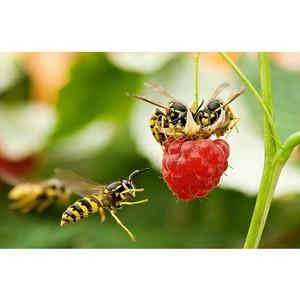 Эксперт КФУ - о нашествии опасных насекомых в регионе