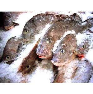 Около тонны импортной рыбы поступит на московский рынок