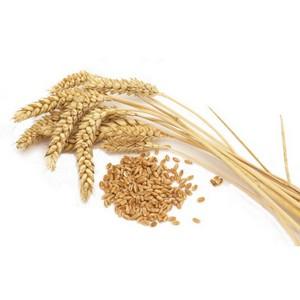 Мероприятия по сохранению и воспроизводству плодородия сельхозземель не проводились