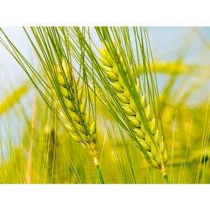 О выявлении факта безответственного отношения к хранению и реализации зерна