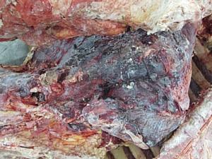 11 тонн мяса сомнительного качества возвращено в Белоруссию