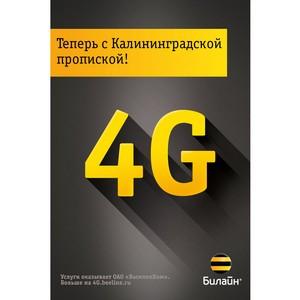 С запуском 4G общий трафик в сети «Билайн» в Калининграде вырос на треть