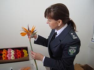 Более 22 млн. цветов завезли к 8 марта через Новосибирск для реализации на территории Сибири.
