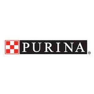 Purina и «Котопес» помогут бездомным животным обрести семью