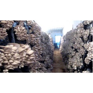 За грибами в Гулькевичи