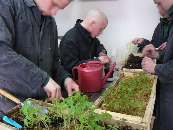 В Мариинской воспитательной колонии несовершеннолетние осужденные будут выращивать арбузы и дыни