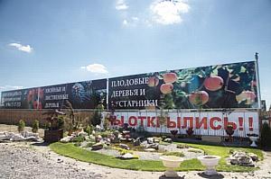 В Волгоградской области проходят фитосанитарные обследования леса
