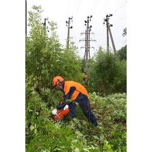 В 2015 году Липецкэнерго расчистит вблизи линий электропередачи 930, 4 га просек