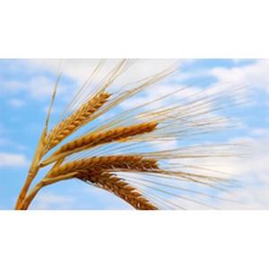Более 1,5 млрд рублей направил Россельхозбанк на финансирование посевной кампании на Южном Урале