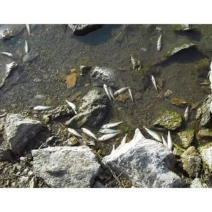 """""""ел¤бинские эксперты ќЌ' вз¤ли на контроль ситуацию с мором рыбы в озере —инеглазово"""