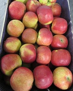 Польские яблоки вместо болгарских медикаментов