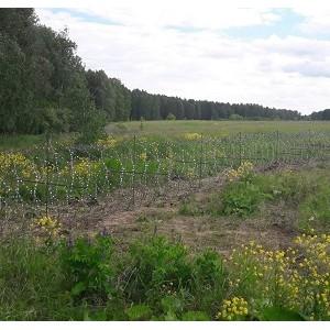 Челябинские эксперты ОНФ призвали убрать колючую проволоку на территории Шершневского лесничества
