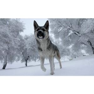 Бешенство в Ярославском районе, д. Глебовское при исследования трупа домашней собаки