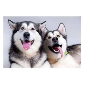 Итоги работы за I квартал 2015 года в сфере государственного ветеринарного надзора