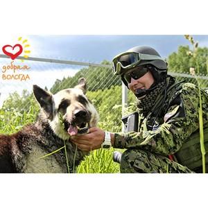 Участники фестиваля «Добрая Вологда» расскажут о подвигах служебных собак