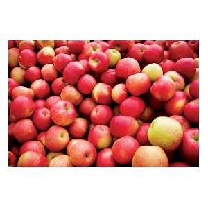Сибирские яблоки оказались лучше кубанских