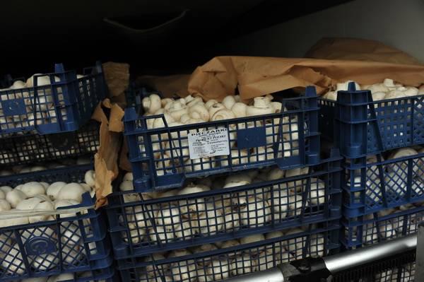Смоленскими таможенниками задержано 60 тонн «санкционки», ввозимой в Россию под видом «химии»