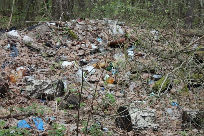 Активисты ОНФ в Мордовии обеспокоены количеством свалок в лесной зоне Лямбирского района
