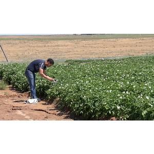 Об итогах феромониторинга восточной и персиковой плодожорки в Астраханской области