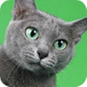 Запуск нового интернет-проекта, начинаем хотеть Кошку