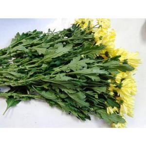 О выявлении карантинного объекта в срезах хризантемы