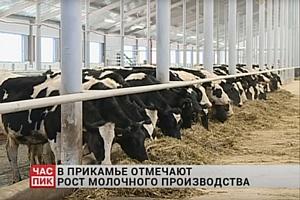 Робот-подравниватель кормов Lely Juno трудится в Пермском крае