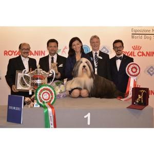 Впервые собака из России выиграла Чемпионат мира-2015!