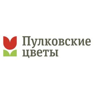 «Пулковские цветы» расцвели на 2000 кв. м