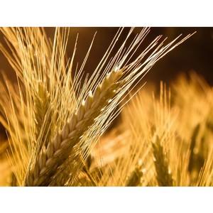 Об итогах за 1 полугодие 2016 года в области надзора за качеством и безопасностью зерна