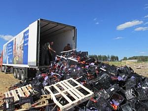 Более двадцати тонн нектаринов уничтожено в Брянске